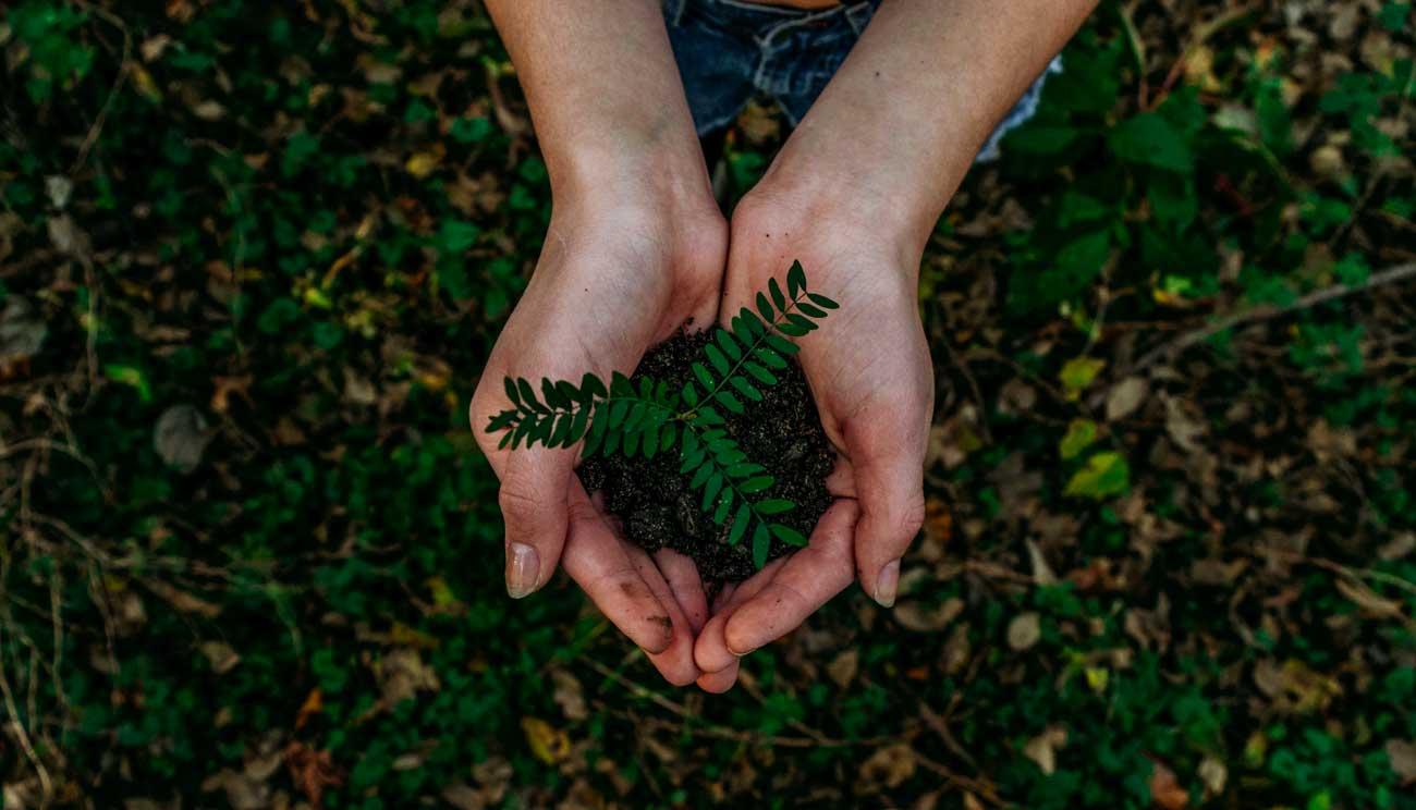 Hands holding plant over soil